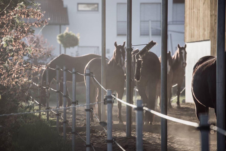 Hofladen Kratzer - Aktivstall für Pferde