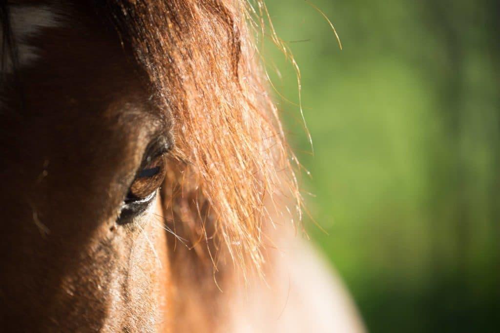Hofladen Kratzer - Pferd Detail