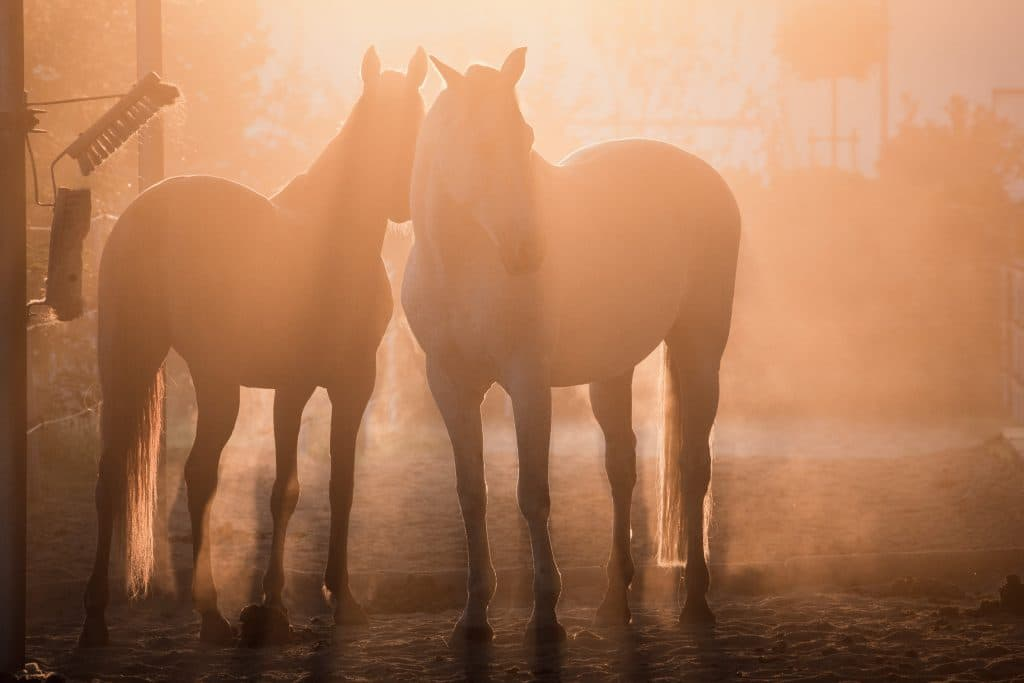 Hofladen Kratzer - Pferde